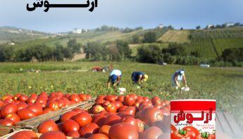 رب گوجه فرنگی و بازتاب کم نور